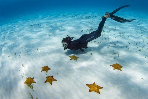 Isla Cozumel | Sport Diver