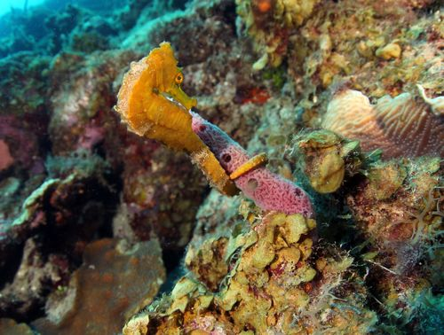 Experience the Best Scuba Diving in Curaçao with Ocean