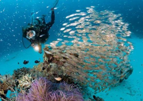 Ryukyu Islands Where To Dive Sport Diver