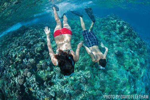 Scuba Diving Maui and Lanai, Hawaii   Sport Diver