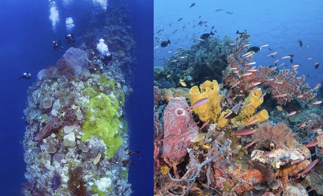 Wakatobi scuba diving blade