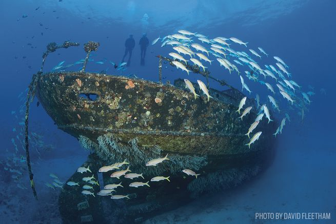 The Best Scuba Diving In Maui, Hawaii