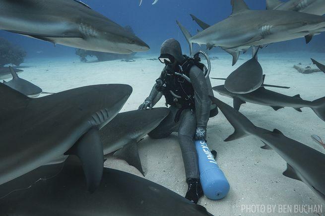 cristina zenato dives with sharks in bahamas