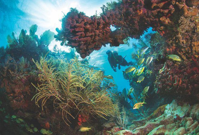 Beginner Scuba Diving Sites In The Florida Keys & Key West