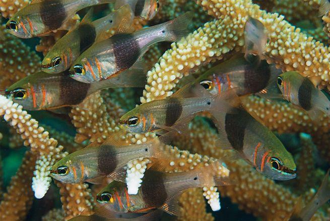 Photo Gallery: Scuba Diving Papua New Guinea
