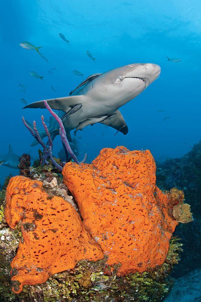 10 Best Warm-Water Scuba Diving Destinations