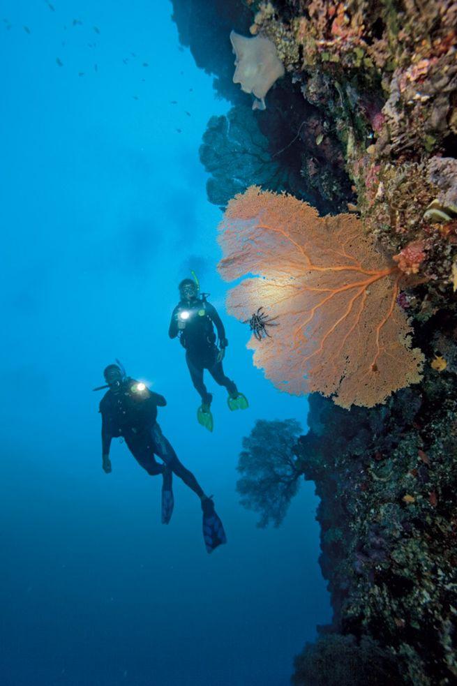 10 Coolest PADI Scuba Diving Specialties
