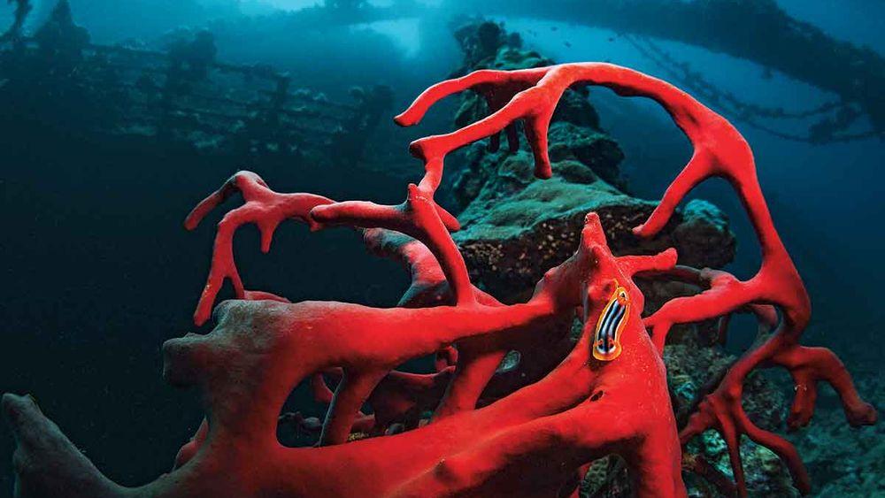 nudibranch photo umbria