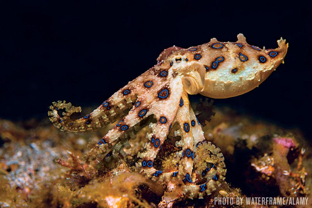 An octopus in the ocean