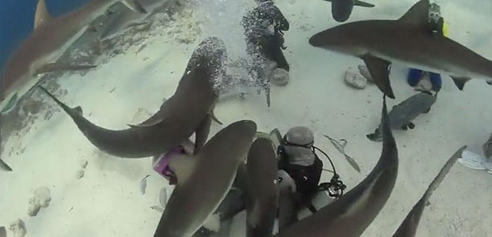 shark-feeding Stuart Cove's