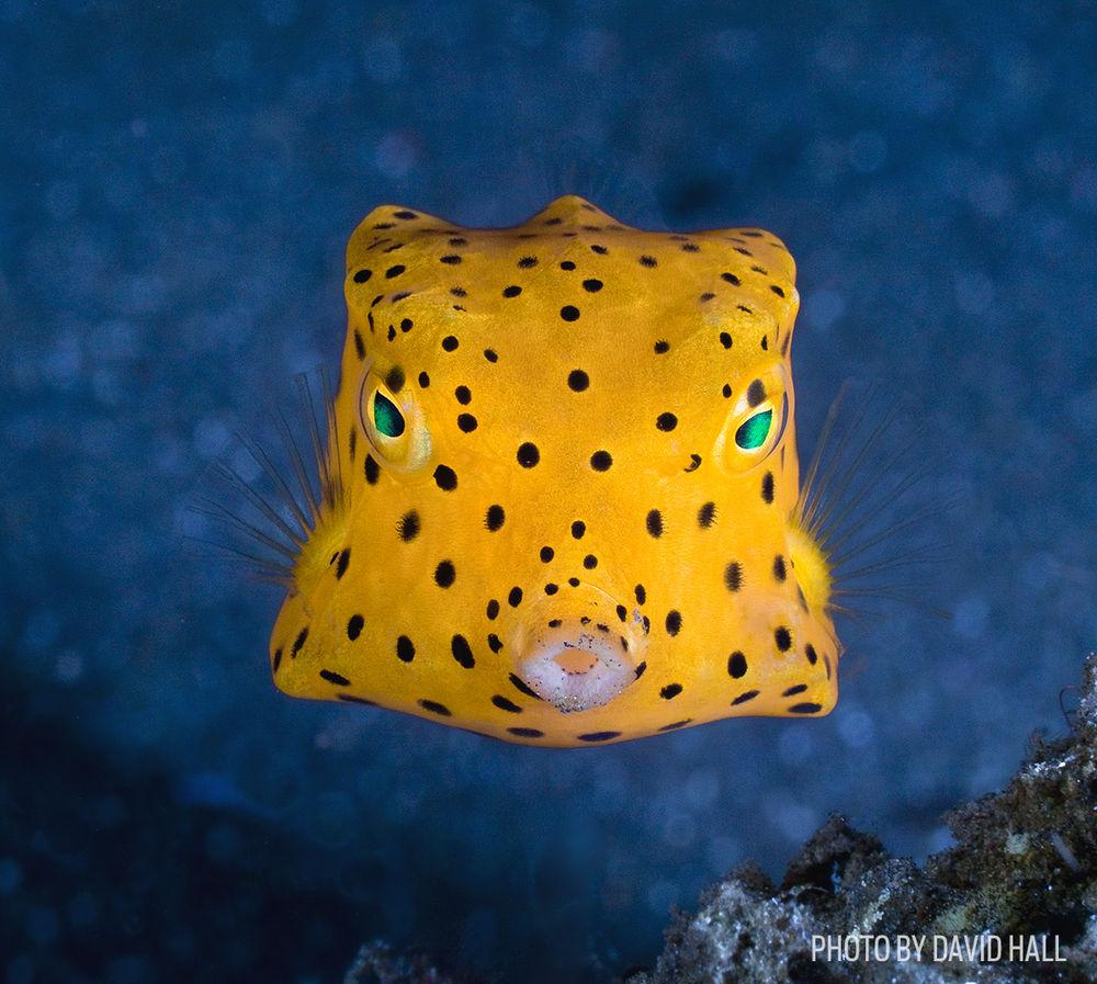 boxfish fish photo
