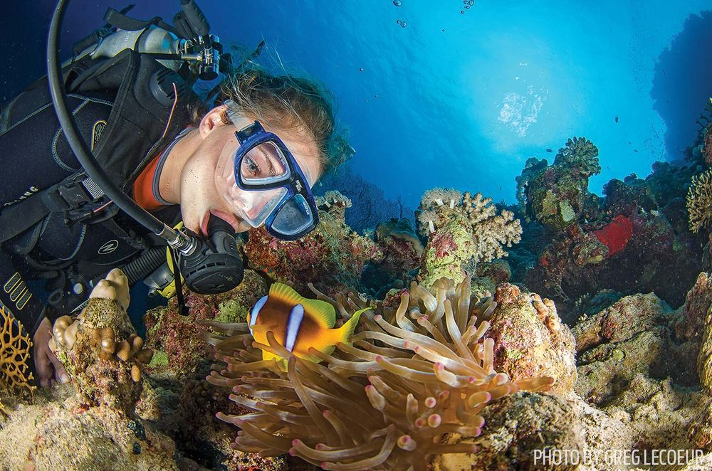 diver anemonefish photography