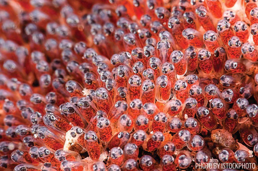 fish eggs photo