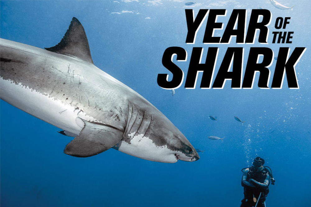 year of the shark