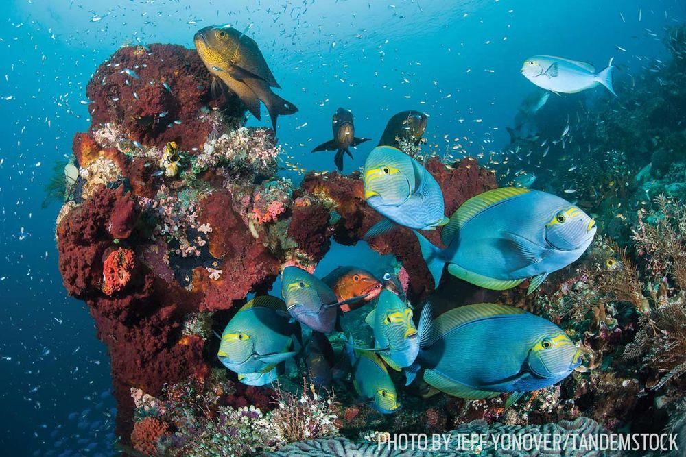 Raja Ampat coral fish scuba