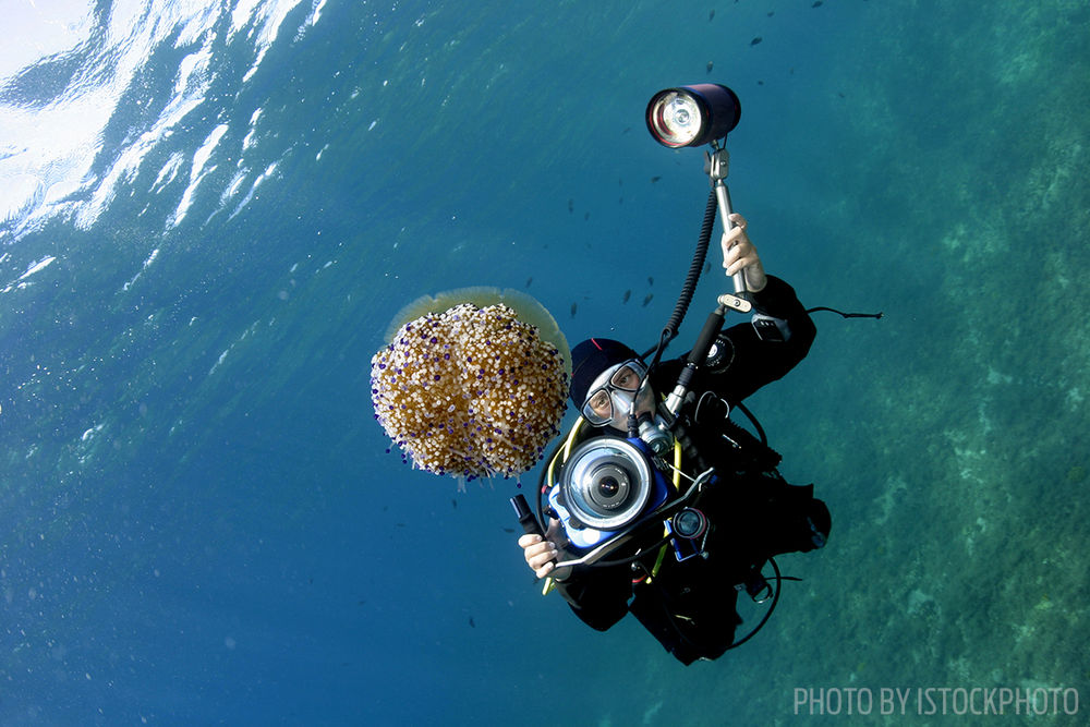 divers alert network photography safety