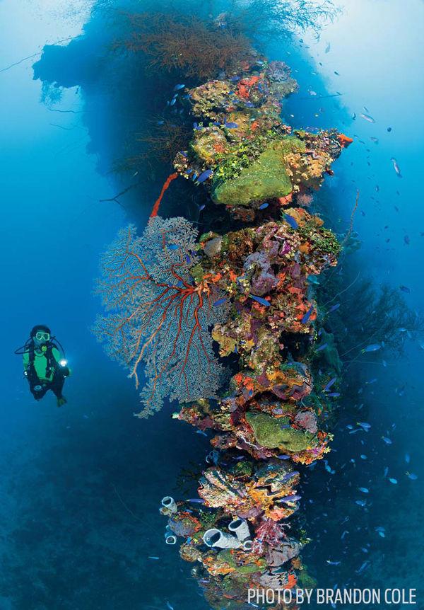 Scuba diving trips best dive sites sport diver - Best dive sites ...