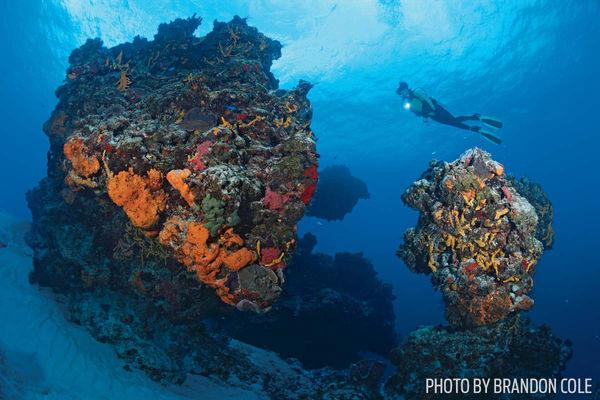 Best cozumel scuba diving sites and adventures sport diver - Best dive sites ...