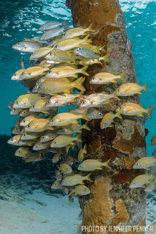 10 best places to scuba dive with schooling fish sport diver for Best places to fish