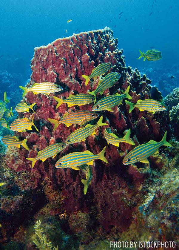 Best dive sites in dominica sport diver - Best dive sites ...