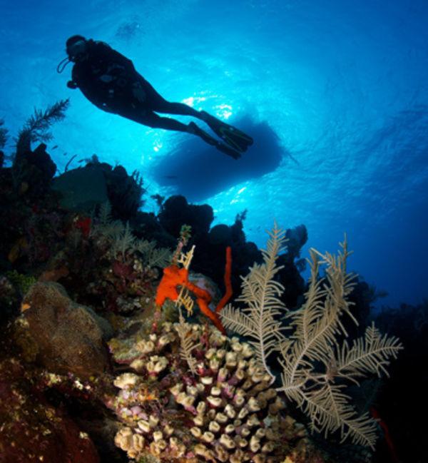 Top 10 grand cayman scuba diving sites sport diver - Padi dive sites ...
