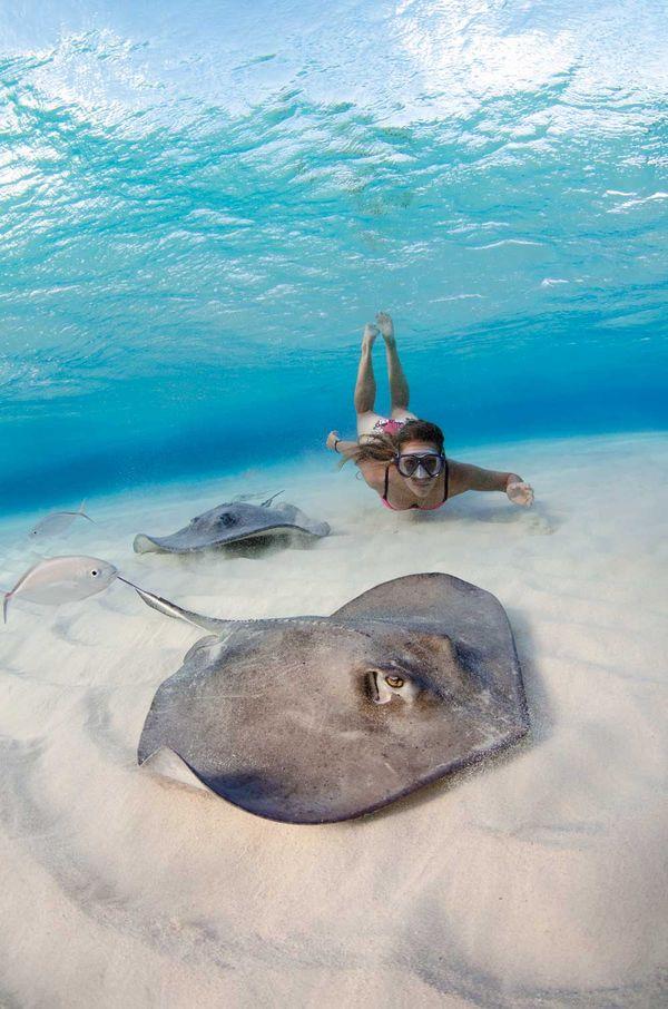 Crowdsourcing Grand Cayman Sport Diver