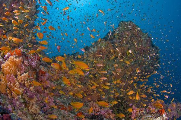 The World's Most Beautiful Coral Reefs | Sport Diver 10 Most Beautiful Coral Reefs World
