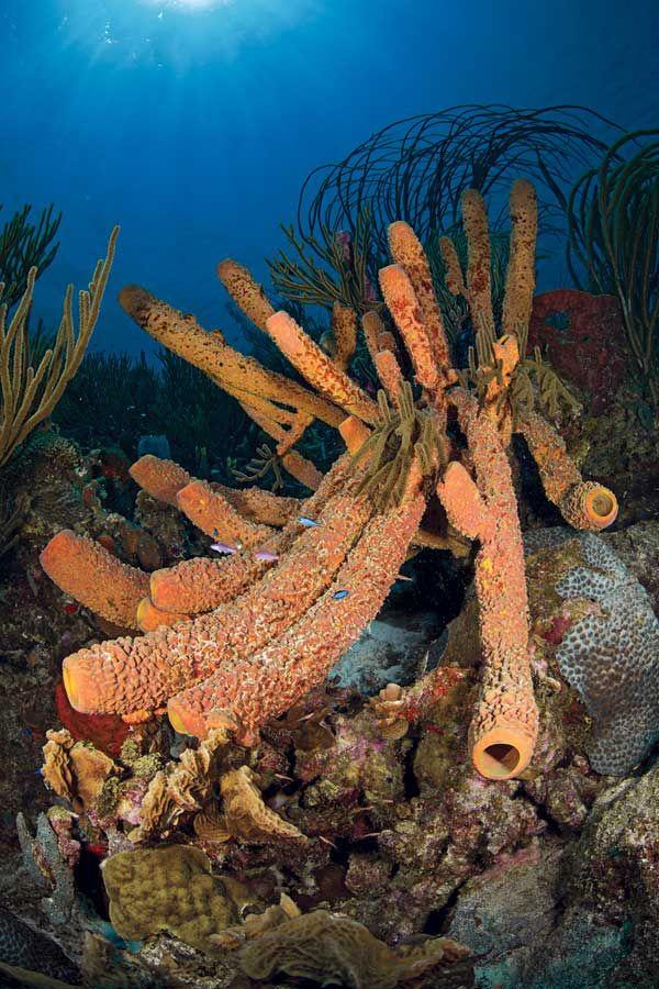 Photo gallery scuba diving in bonaire sport diver - The dive hut bonaire ...
