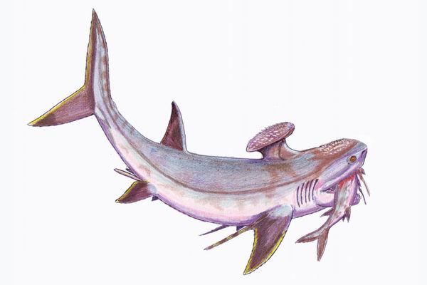 Shark Discovery: 5 Pre...
