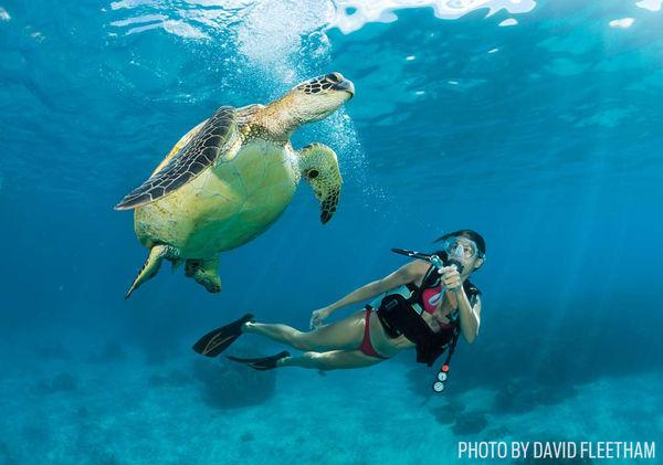 Scuba Diving Gear Picks for Beginners