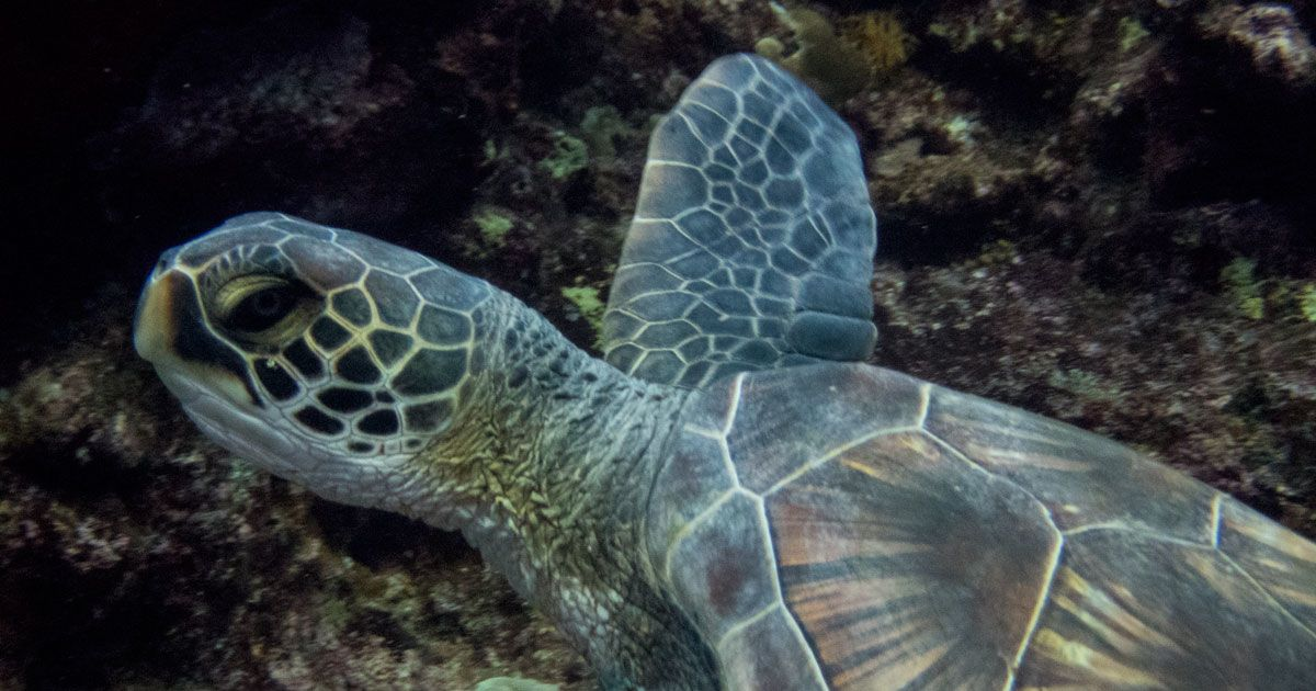 A Travel Guide to Diving Maui, Hawaii