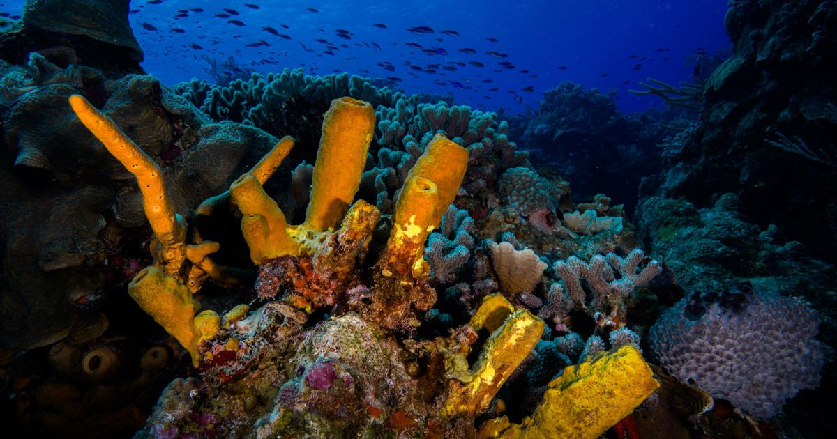 Why Cozumel is a Sport Diver Editor's Pick | Sport Diver