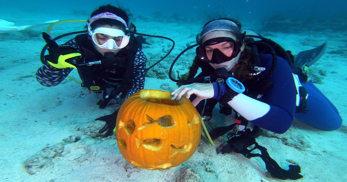 VIDEO: Scuba Divers Carve Pumpkins Underwater in Florida Keys