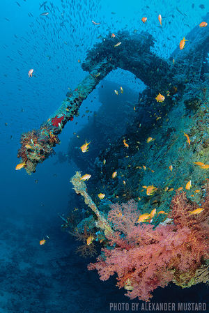 HMS Thistlegorm — Egypt, Red Sea