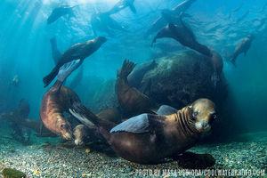 Sea Lions   La Paz, Mexico