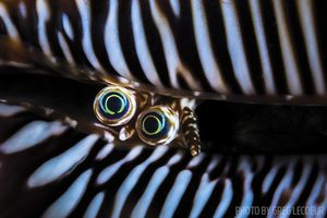 imaging tips for underwater photographers