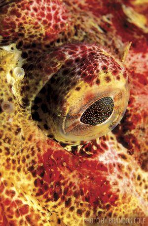 fish eye imaging tips
