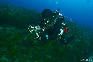Scuba Diver with Camera Underwater in Jupiter, Florida