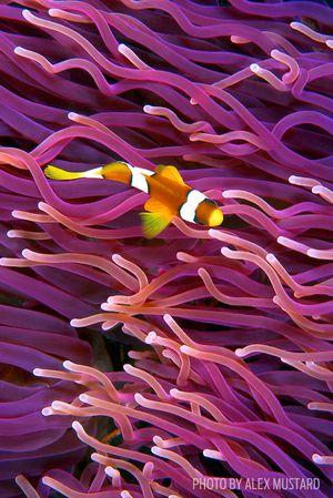 underwater photo tips clownfish patterns