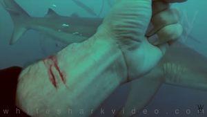 man cuts wrist sharks video