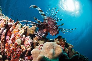 scuba diving the great barrier reef