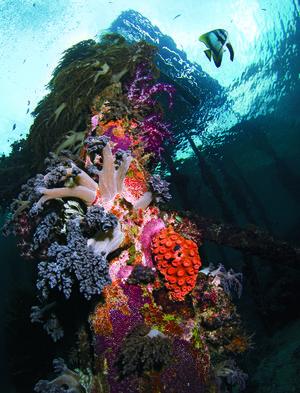 soft corals of Raja Ampat's Arborek Jetty