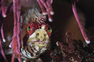 scuba diving monterey california