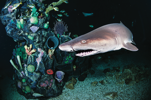 scuba diving colorado aquarium