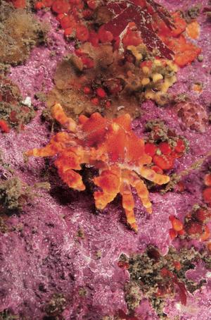 scuba diving washington