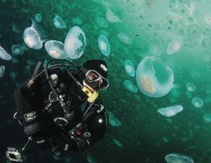 scuba diving alaska