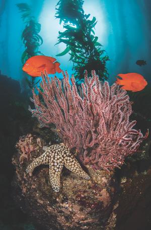 scuba diving catalina island california