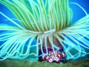 anemone macro photography