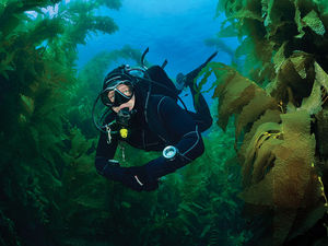 Scuba diving in the cold waters off San Clemente Island