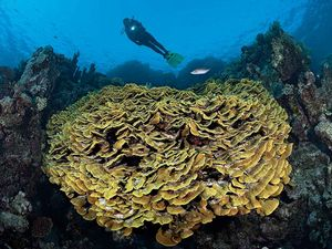 coral reef photo tips